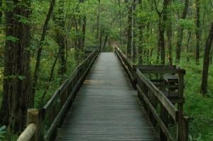 boardwalk-in-radnor-lake-state-park-tennessee-tn399
